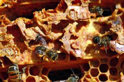 how to use raw propolis